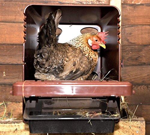 Hühner kaufen Legenest kaufen